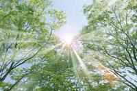 新緑・陽射しイメージ