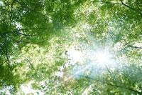新緑・陽射しイメージ 11011002186| 写真素材・ストックフォト・画像・イラスト素材|アマナイメージズ