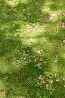 グリーンイメージ 11011002844| 写真素材・ストックフォト・画像・イラスト素材|アマナイメージズ