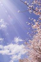 桜と青空 11011002978| 写真素材・ストックフォト・画像・イラスト素材|アマナイメージズ