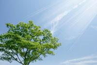 新緑と青空 11011003008| 写真素材・ストックフォト・画像・イラスト素材|アマナイメージズ