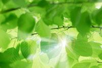 木漏れ日 11011003009| 写真素材・ストックフォト・画像・イラスト素材|アマナイメージズ