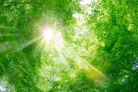 新緑と青空 11011003013| 写真素材・ストックフォト・画像・イラスト素材|アマナイメージズ