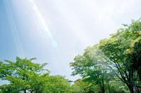 新緑と青空 11011003018| 写真素材・ストックフォト・画像・イラスト素材|アマナイメージズ