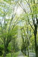 新緑と道 11011003030| 写真素材・ストックフォト・画像・イラスト素材|アマナイメージズ