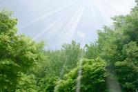 新緑と青空 11011003045| 写真素材・ストックフォト・画像・イラスト素材|アマナイメージズ