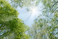 新緑と青空 11011003047| 写真素材・ストックフォト・画像・イラスト素材|アマナイメージズ