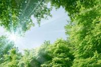 新緑と青空 11011003049| 写真素材・ストックフォト・画像・イラスト素材|アマナイメージズ