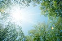 新緑と青空 11011003065| 写真素材・ストックフォト・画像・イラスト素材|アマナイメージズ