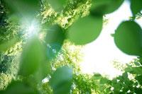 光と葉のイメージ