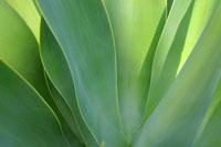 緑の葉 11011003610| 写真素材・ストックフォト・画像・イラスト素材|アマナイメージズ