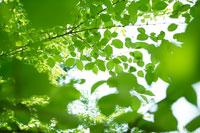 木の葉 11011003629| 写真素材・ストックフォト・画像・イラスト素材|アマナイメージズ