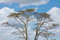 木と空 11011004194| 写真素材・ストックフォト・画像・イラスト素材|アマナイメージズ