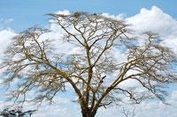 木と空 11011004195| 写真素材・ストックフォト・画像・イラスト素材|アマナイメージズ