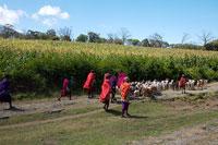 道を歩くマサイ族