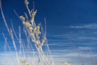 草と空 11011004551| 写真素材・ストックフォト・画像・イラスト素材|アマナイメージズ