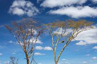 木と空 11011004556| 写真素材・ストックフォト・画像・イラスト素材|アマナイメージズ