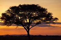 オレンジの空と一本の木