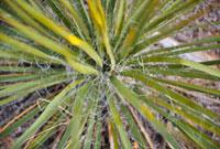植物のアップ 11011010704| 写真素材・ストックフォト・画像・イラスト素材|アマナイメージズ