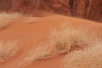 モニュメントバレー大地と植物 11011010873| 写真素材・ストックフォト・画像・イラスト素材|アマナイメージズ