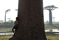 バオバブの木と少年