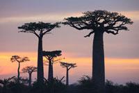 バオバブの木と空