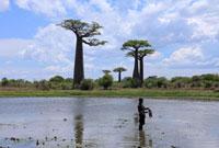 バオバブの木と子供