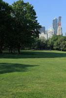 セントラルパークのグリーン