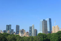 セントラルパークのグリーンとビル群