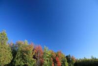 青空と秋の木