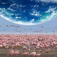 地球とフラミンゴ 11011011605| 写真素材・ストックフォト・画像・イラスト素材|アマナイメージズ