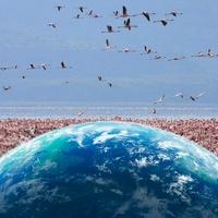 地球とフラミンゴ