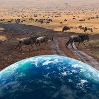地球とヌー 11011011611| 写真素材・ストックフォト・画像・イラスト素材|アマナイメージズ