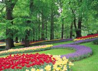 キューケンホフ公園の花壇 オランダ