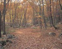 落ち葉の並木道