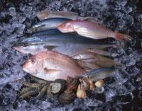 氷の上の魚介類
