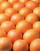 一面のネーブルオレンジ