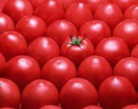 一面のトマト