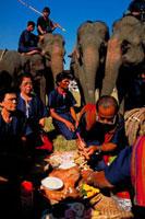 スーリンの象祭り