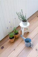 ハーブの鉢植え 11014007120| 写真素材・ストックフォト・画像・イラスト素材|アマナイメージズ