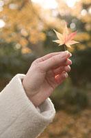 紅葉を持つ手