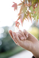 紅葉を手にする女性の手