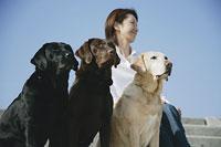 犬(ラブラドール・レトリーバー)3頭と女性