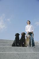 散歩をする犬(ラブラドール・レトリーバー)3頭と女性 11014008692| 写真素材・ストックフォト・画像・イラスト素材|アマナイメージズ