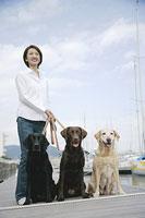 散歩をする犬(ラブラドール・レトリーバー)3頭と女性