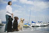 散歩をする犬(ラブラドール・レトリーバー)3頭と女性 11014008700| 写真素材・ストックフォト・画像・イラスト素材|アマナイメージズ