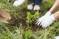 植林をする若者 11014019515| 写真素材・ストックフォト・画像・イラスト素材|アマナイメージズ