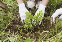 植林をする若者 11014019516| 写真素材・ストックフォト・画像・イラスト素材|アマナイメージズ