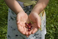 木の実を持った少女の手
