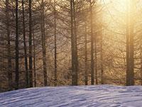 林の中から見える朝日